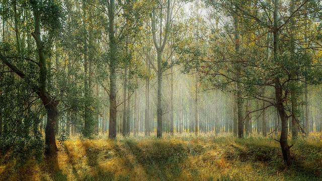 Išsamiai apie miškininkystės paslaugas